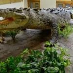 DÓNDE IR: Visita el @Museo_LaVenta en Villahermosa, Tabasco
