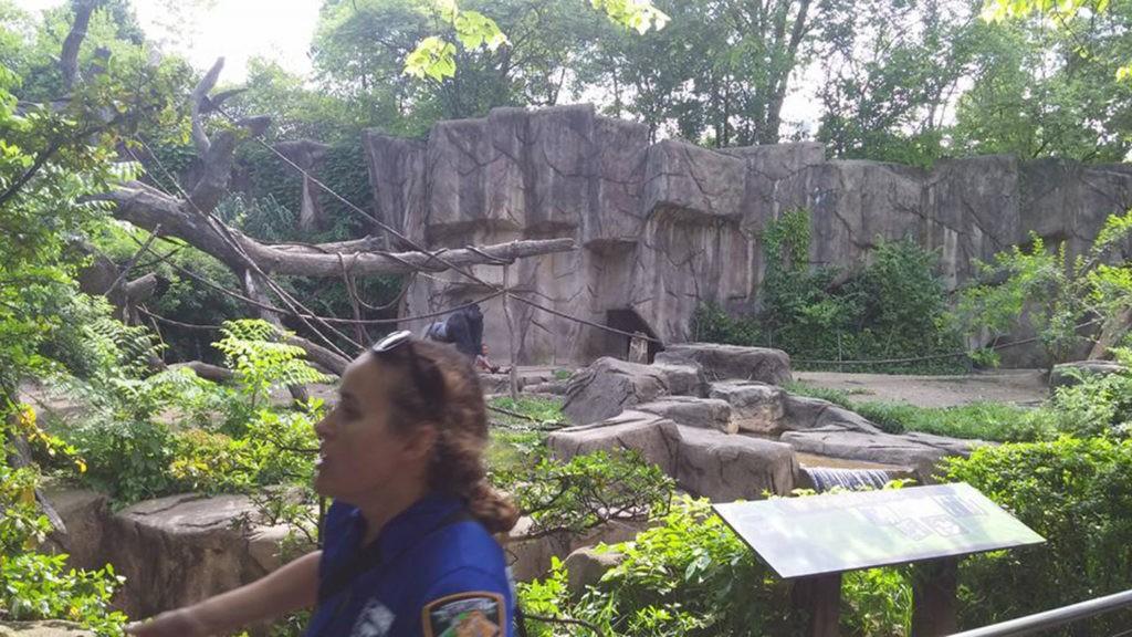gorila-zoo